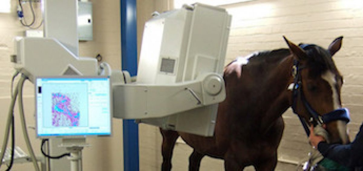 Artificial Insemination Horses